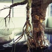 Growing Raining Tree